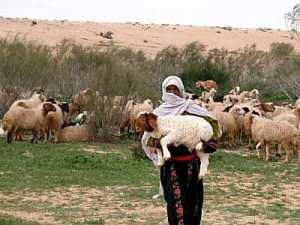 Shepherd in Negev